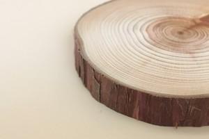 東京の木の「コースター」