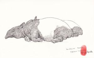 drawing マレーバク 2012年(額装未)