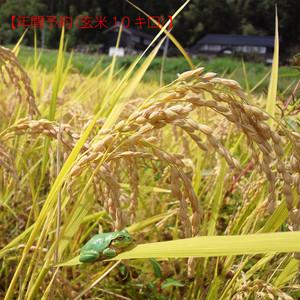 【年間予約】ササニシキ玄米10キロ(平成29年産自然栽培米)
