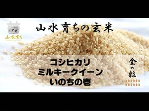 【金の粒】2㎏・玄米