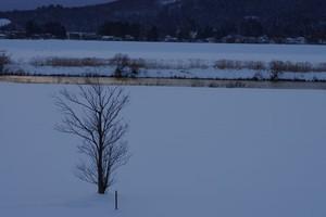 Akita Winter
