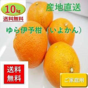 和歌山県由良町産 ゆら 伊予柑(いよかん)【ご家庭用】10kg /箱【送料無料】