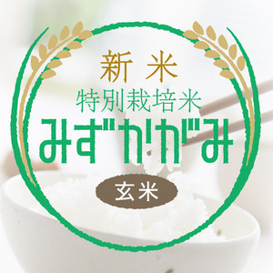 新米・特別栽培米 みずかがみ 玄米30kg〈1週間以内で発送〉