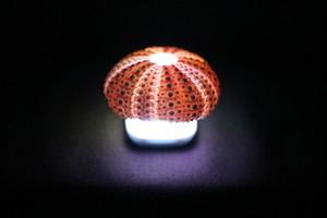 Healing lamp ウニ殻
