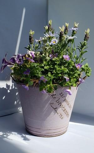 irodori からつ 四季の寄せ植え〜パープル系(小サイズ)〜※お花の種類・容器はお任せ下さい!