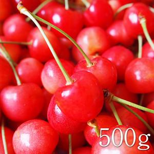 【期間限定】南アルプスの恋するさくらんぼ(減農薬無化学肥料) 500g