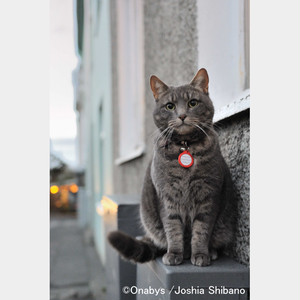 No.11-A4サイズ『Cats in Reykjavik #1』
