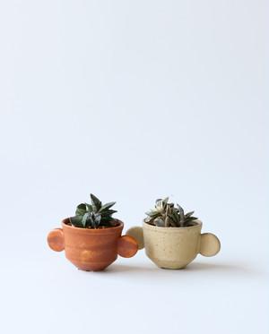 小さな植木鉢と植物セット