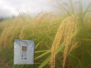 <新米>農薬不使用 佐渡コシヒカリ(在来種)玄米 2kg
