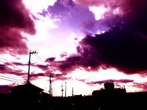 夕陽 (紫) 17
