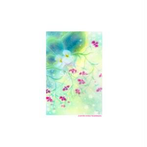 【選べるポストカード3枚セット】No.152 ベコニアとロベリア