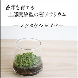 【苔類を育てる】小さな苔の森 台形ポット マツタケジャゴケ