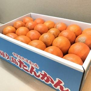 【送料無料】屋久島たんかん 5kg 《訳あり品》無農薬・無化学肥料栽培