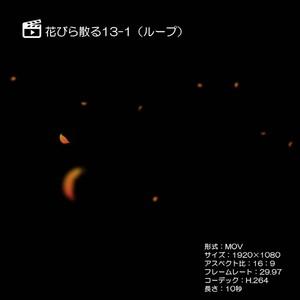 花びら散る/紅葉13-1(ループ)