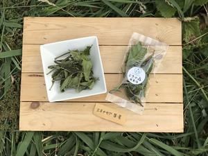 エキナセア 葉と茎