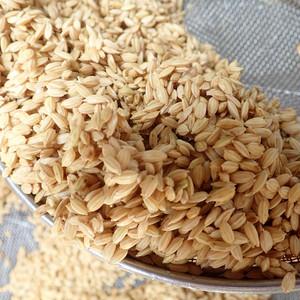 【定期便のおためし】自然栽培歴6年 ササシグレ 玄米450g(3合)