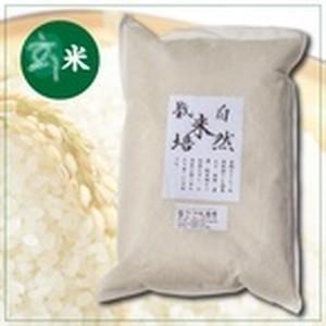 自然栽培コシヒカリ 玄米