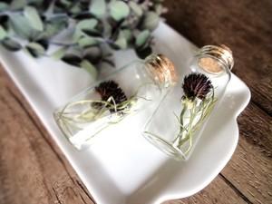 植物標本 Botanical Collection■No.37-A 矢車菊 ブラックボール