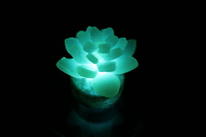 Healing lamp 多肉植物