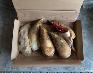 京たけのこ 箱(上・白子)約1.5kg 期間限定3月10日~5月10日