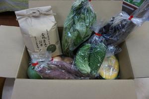 合鴨農法のお米(白米4.3キロ)と野菜のセット 大 (クール便)