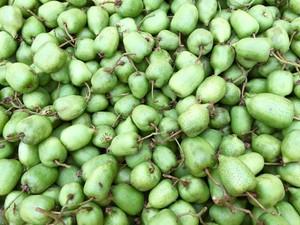 【2kg】 自然栽培 サルナシ