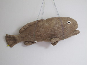 クエ Longtooth grouper