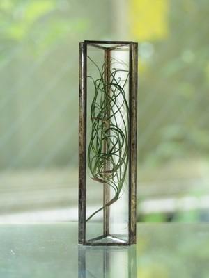 HACOMIDORI 植物標本 ゴアナクロー(小)