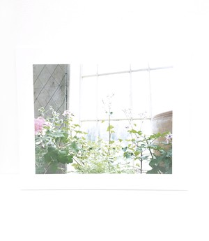 仙谷 朋子  「   fragrance notes  -fleurs- 」