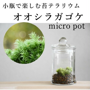 小さな苔の森 オオシラガゴケ micro pot ◆ふっくら優しい【苔テラリウム】