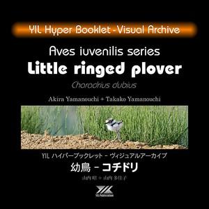 YIL ハイパーブックレット - ヴィジュアルアーカイブ:幼鳥 - コチドリ