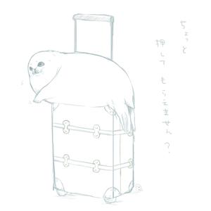 旅するあざらし 定期便  ~1年分払い~
