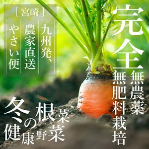【送料無料*一部地域を除く】無農薬・無肥料栽培 冬の根菜・健康野菜 やさい便