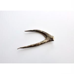 【 鹿の角 】標本 vintage specimen japan