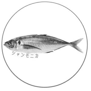 缶バッジ小(アジ)