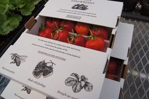 [人気No.1]ARLBIEN STRAWBERRY 700g