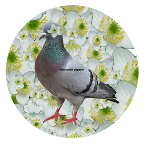 Petit pigeon tin badge