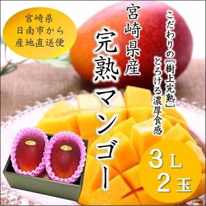 宮崎完熟マンゴー 3L×2玉 化粧箱入