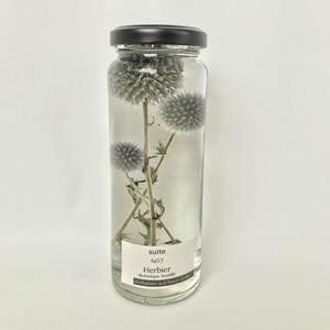 herbier NO7 ルリタマアザミ