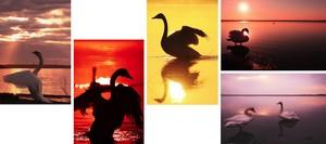 ウトナイ湖の白鳥 ポストカードセット