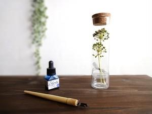【受注生産】植物標本 Botanical Collection■スリムボトル■ヤツデの実
