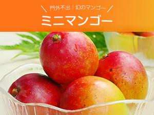 門外不出!幻のマンゴー ミニマンゴー 約1キロ 沖縄県産