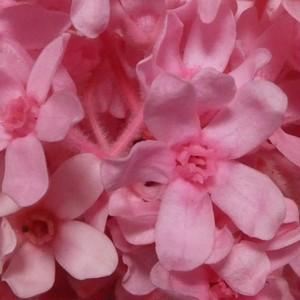 プリザーブドフラワー花材 ブルースタ- 1輪