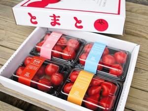 数量限定☆フルーツトマト食べ比べセット☆桃太郎 ルネッサンス サターン 優美