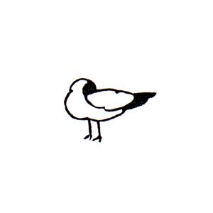 アホウドリ (ロ) Albatross