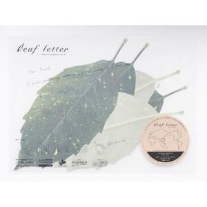 leaf letter - Aucuba japonica