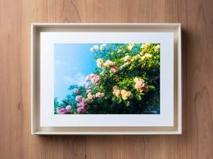 PhotoSketch&BOXSCAPE -Rose03-