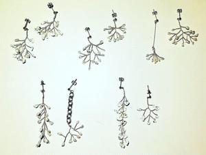 White series/ pierce type