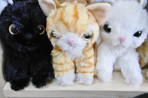 渡辺あきお「いっしょがいいね」猫シリーズぬいぐるみ