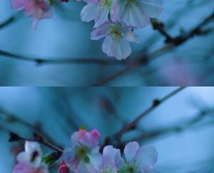 糸崎公朗『冬桜』PB111020y